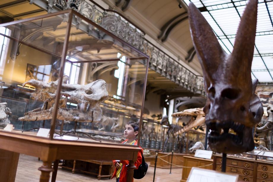 visite du musée d'histoire naturelle