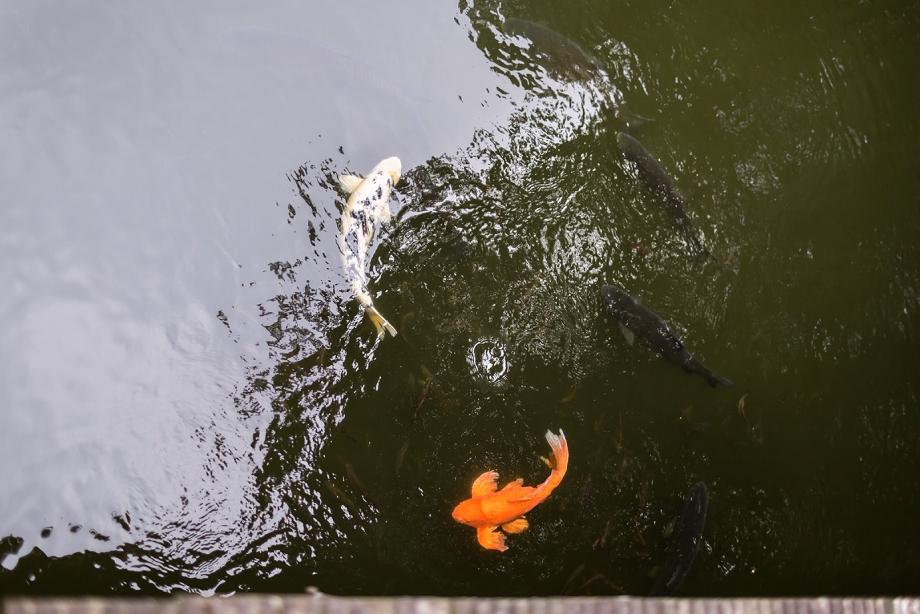 Séance grossesse Haut de Seine